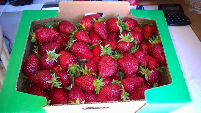 A flat of strawberries from Spooner Berry Farm